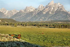Cowboy Dwarfed by the Tetons, Grand Teton National Park (David C. McCormack) Tags: ranch horses landscape cowboy riding rockymountains wyoming tetons horseback jacksonhole roundup grandtetonnationalpark duderanch