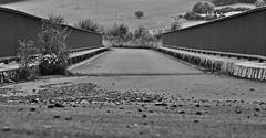 bridge in focus (friedrichfrank1966) Tags: street bridge bw monochrome walk sunday railing asphalt brcke sonntag spaziergang gelnder strase