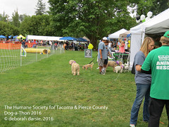 DAT2016_Crowd_1059 (greytoes_99) Tags: agility dat2015 dat2016 event humanesocietytacoma people summer tacoma tacomahs volunteers dog humananimalbond cat lakewood wa us