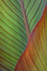 Dubuque Abstract (pchgorman) Tags: leaves july iowa abstracts dubuque