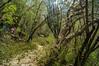 DSC03267 (Braulio Gómez) Tags: barrancadehuentitã¡n biodiversidad caminoamascuala canyon canyonhuentitan faunayflora floresyplantas guadalajara ixtlahuacandelrío jalisco mountainrange méxico barrancadehuentitán naturaleza barranca paisaje huentitán senderismo sierra guardianesdelabarranca