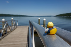 Helga at Cayuga Lake (Karol A Olson) Tags: vacation lake newyork water dock helga ithaca cayugalake stewartpark rubberduckie jul16