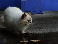 Gato HDR (raulzv17) Tags: longexposure sunset cat canon hdr guapiles largaexposicion