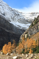 Mount Whyte (dbonny) Tags: snow canada mountains fall rockies fallcolors alberta banff rockymountains larch lakeagnes banffnationalpark canadianrockies banffnp mtwhyte mountwhyte