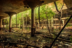 The Trees Are Back Again (Thomas Hawk) Tags: corktown dpsbookdepository detroit detroitbookdepository michigan rooseveltwarehouse waynecounty abandoned bookdepository tree trees fav10 fav25 fav50