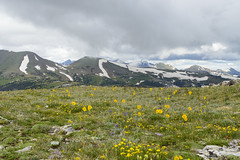 Rocky Mountain Tundra Wildflowers (aaronrhawkins) Tags: wildflowers snow peak summit rockymountainnationalpark rockymountains tundra flowers glacier snowbuttercup vista clouds colorado mountain nature aaronhawkins