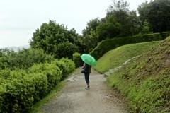 Blurred (Aspen_CarterAPW) Tags: mysterious green garden boboli florence italy umbrella blurred rain perfect nature
