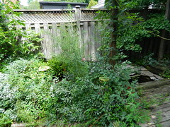 Broadview DanforthToronto backyard clean up before by Paul Jung Gardening Services (Paul Jung Gardening Services) Tags: broadview playterestates weeding pauljunggardeningservices torontogardeningservices