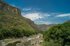 DSC03241 (Braulio Gmez) Tags: barrancadehuentitn biodiversidad caminoamascuala canyon canyonhuentitan faunayflora floresyplantas guadalajara jalisco mountainrange naturaleza sierra senderismo paisaje barrancadehuentitn barranca huentitn ixtlahuacandelro mxico guardianesdelabarranca