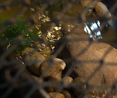 IMG_1543.CR2 (jalexartis) Tags: erosion erosioncontrol stones stonesforerosioncontrol bask basking baskingstone baskingrock aquatic aquatichabitat aquarium abovetanknetting turtlesecurity fallsafe lighting perspective jalexartis