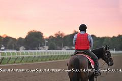 Saratoga sunrise (Rock and Racehorses) Tags: websaratogasunriseska5356page2sarahandrew ny thoroughbred myra racehorse saratoga nyra outrider pony sunrise scenic