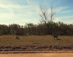 Dos zorros (Litswds) Tags: zorros invierno flickr winter pasto argentina fox miradas parque verde green trip viaje da rbol