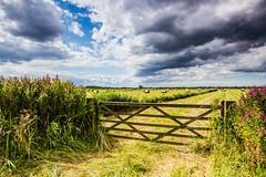 Upton marsh-5090 (Patrick Ladbrooke) Tags: haymaking upton norfolk marsh broads canon landscape