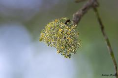 Musgo (Andres E. Meyer) Tags: musgo moss