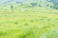 10Tonomine Highland (anglo10) Tags:   japan field