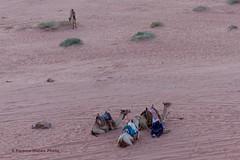 Wadi Rum, Jordan, our Transport, awaiting for us (ssspnnn) Tags: camels camelos camellos desiertodewadirum wadirum desert deserto jordania lumixfz200 panasonic snunes spereiranunes nunes