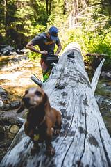 (The Noisy Plume) Tags: idaho dachshund weenie weeniedog log fishing flyfishing nature forest woods