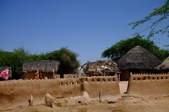 village (shahmurai) Tags: fujifilmxt1 nagarparkar thar sindh pakistan village strawhuts