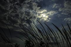 Dune Grass silhouette (TAC.Photography) Tags: sunrays dunegrass silhouette grass darksky clouds contrasts sleepingbeardunes tacphotography