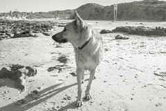IMGP3337 (jamin.sandler) Tags: pentaxistds palmachimbeach smcpentaxm2435mm dog