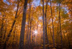 Fall Sunburst (BryanNewland) Tags: autumn fall trees hiawathanationalforest fallcolors leaves baymillsindiancommunity upperpeninsula north michigan greatlakes