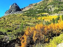Yosemite National Park Fall Colors (moonjazz) Tags: yosemitenationalpark fall seasons photography sierranevada gold yellow aspen travel california green trees geology mountains pass highway tiogapass highway120 bright vista moonjazz
