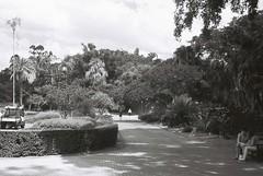 Brisbane Botanic Gardens (goodfella2459) Tags: nikon f4 adox silvermax 100 35mm black white film analog brisbane botanic gardens queensland path people park milf