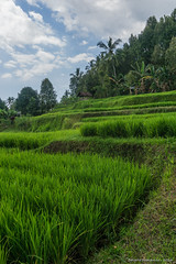_DSC3944_Bali_09_16 (Saverio_Domanico) Tags: bali indonsie munduk voyage