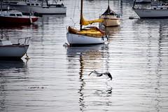 Monterey. Morning. (mariya_ka) Tags: nikond600 nikkor70300 travels ocean pacificocean birds boat water yellow pelican reflection
