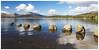 Milarrochy, Loch Lomond-2 (Gordon_Farquhar) Tags: milarrochy loch lomond scotland bay water sky mountains clouds beautiful scenic balmaha rowardennan ben scottish national park