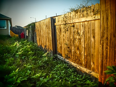 20150603-P6038824.jpg (mcreedonmcvean) Tags: fence firstlight 2015 landescape