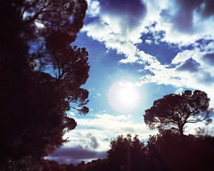 Cloud 2 (lauramacri1) Tags: cielo nuvole sky cloud riflessi reflection sun livorno alberi ombre shadows tree