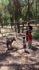 2016.10.10 -3 (amydon531) Tags:   gold coast australia trip travel vacation baby boys kids brothers justin jarvis family toddler cute paradise country kangaroos