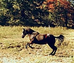 ~1975 Charlie Brown (lasertrimman) Tags: 1975 charlie brown charliebrown horse