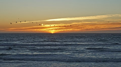 Hurry Home (charlottes flowers) Tags: sunset flyingbirds sanfranciscobeach pacificocean