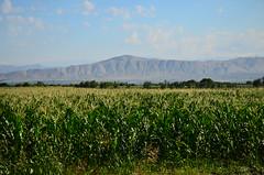 Khor Virap, Armenia (phudd23) Tags: khorvirap armenia corn