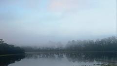 Nevoeiro pela manh, s margens da Represa Guarapiranga - Itapecerica da Serra - Brasil. (marcusviniciusdelimaoliveira) Tags: rvores nevoeiro represa gua manh amanhecer clima tempo