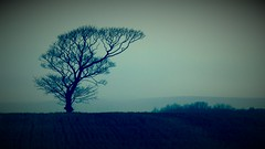 West Lancashire Farmland (pjfchad) Tags: tree field farm lancashire arablefarm