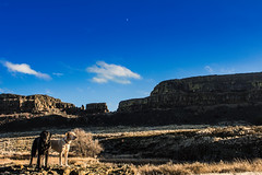 Blue skies / 藍天 (johnwporter) Tags: hiking mountains easternwashington washington desert monumentcoulee coulee basalt labrador blacklab yellowlab easternwa 徒步 山 華盛頓東部 華盛頓州 荒漠 豐碑深谷 深谷 玄武岩 拉布拉多 黑拉不拉多 黃拉不拉多 moon 月亮 sunlakesdryfallsstatepark statepark 太陽湖乾瀑布州立公園 州立公園
