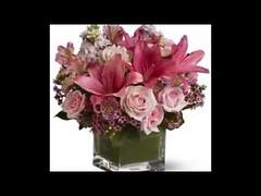 ورود وهدايا عمان (ammanflowers) Tags: ورود نجاح زهور مناسبات زواج شوكولاته باقةورد بالونات خطبه ورودوهداياعمان
