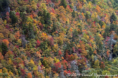 Nantahala National Forest Fall Colors Aerial Photo (Concert_Photos_Magazine) Tags: autumn trees usa leaves forest river nc realestate unitedstates fallcolors property northcarolina aerial autumncolors nationalforest land aerialphoto blueridgemountains countryroad sapphire glenville wnc nantahalanationalforest jacksoncounty westernnorthcarolina lakeglenville panthertownvalley bearlakereserve 11902487142 bearlakegolfclub