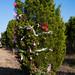 Trees_of_Loop_360_2014_104