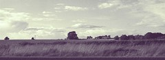 Canon EOS 60D - It always looks so peaceful over there... just on the horizon... (TempusVolat) Tags: trees cloud white black tree monochrome field grass clouds mono escape horizon peaceful fields grasses gareth tempus volat mrmorodo tempusvolat