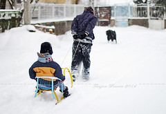 Brothers (Tanjica Perovic) Tags: family winter holiday snow kids children fun serbia joy happiness snowing winterwonderland canonef50mmf14 sleighing canoneos60d pirotsrbija tanjicaperovicphotography
