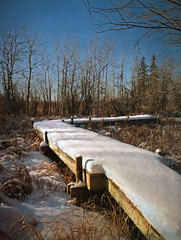 winter catwalk (anniedaisybaby) Tags: winter snow rural manitoba digitalpainting cattails boardwalk marsh catwalk interlake flypaper skeletalmess texturesthanksto topazimpressions