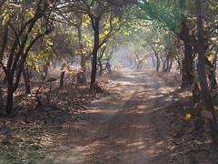 Gujarat 2014 (hunbille) Tags: park india nationalpark wildlife safari national sanctuary gujarat gir wildlifesanctuary sasan cy2 sasangirnationalpark sasangir challengeyouwinner girforest girforestnationalpark