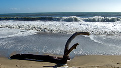 Drifrwood Sculpture (}{enry) Tags: california beach driftwood capitola