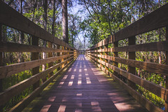 Path (Jonatn Barcel) Tags: park wood trees favorite usa tree nature lines tampa unitedstates florida path wildlife trail