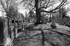 Green Mount Cemetery (Marcellina.) Tags: tree cemetery graveyard md shadows cellphone headstones maryland baltimore graves iphone bmore greenmount 2015 greenmountcemetery iphone5