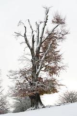 donde habita el silencio (Carla Carvalho Tomas) Tags: snow cold tree arbol solitude nieve neve fro rvore frio navarra urbasa carlacarvalhotoms parquenaturaldeurbasaanda